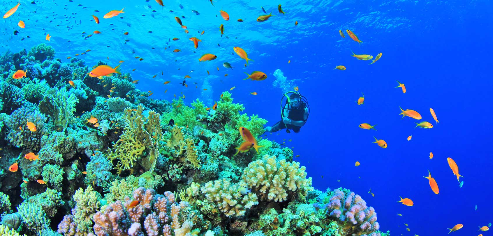 Reef Diving in Philippines Requires Basic Open Water Certification