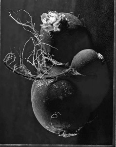 1st Place – Outstanding Achievement in Still Life | Black Turnips