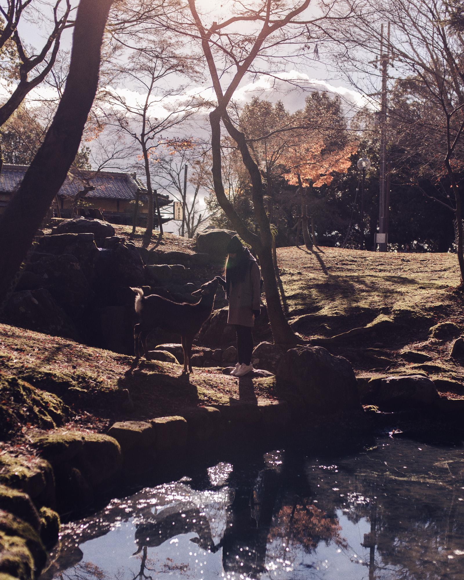Nara_Em_Deers(1).jpg