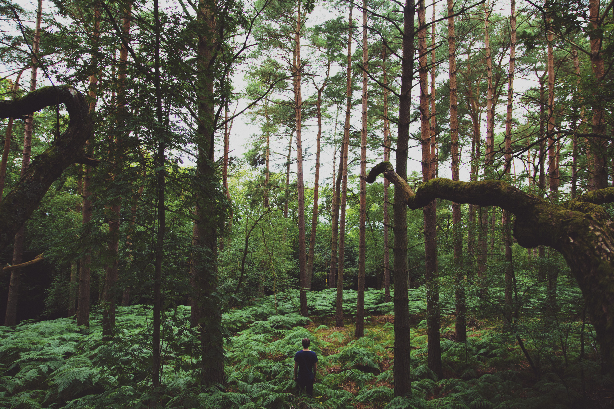 jackson in forest 2.jpg
