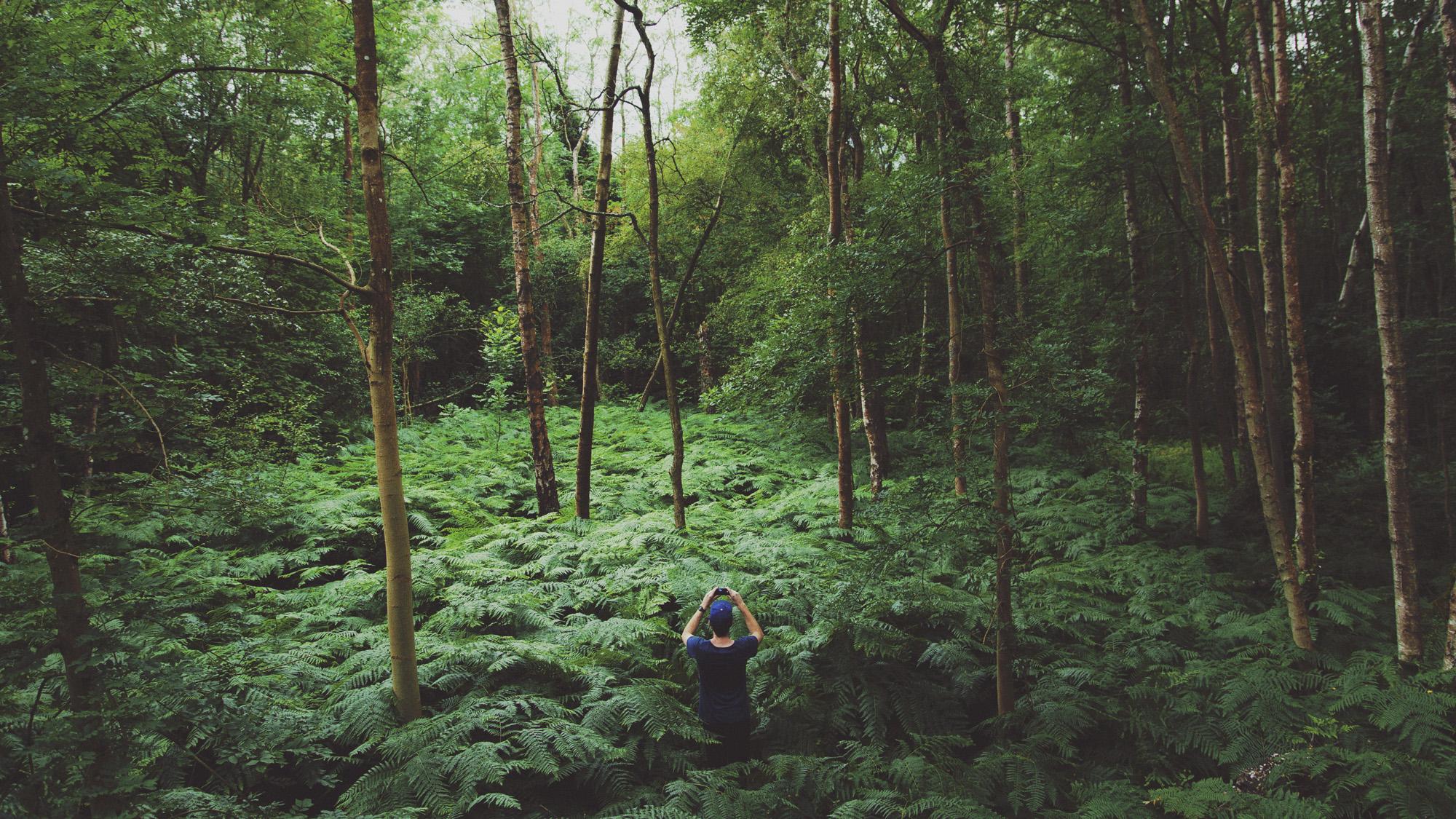 Jackson in woods.jpg