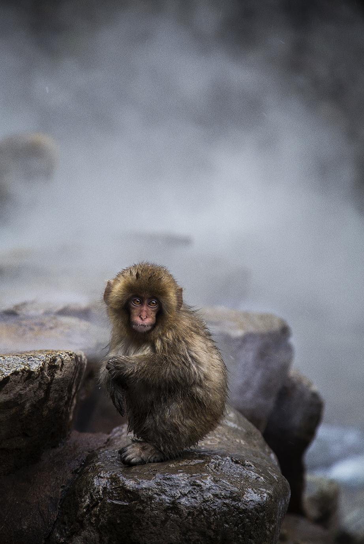 SHIB_Monkey.jpg