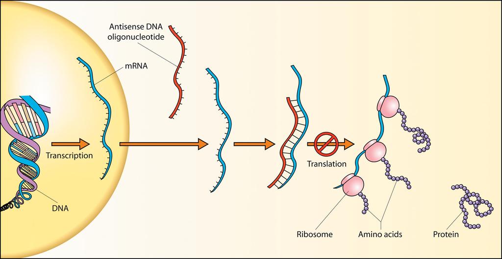 antisense-DNA.png
