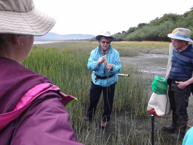 Sweetgrass gathering on the Oregon Coast.
