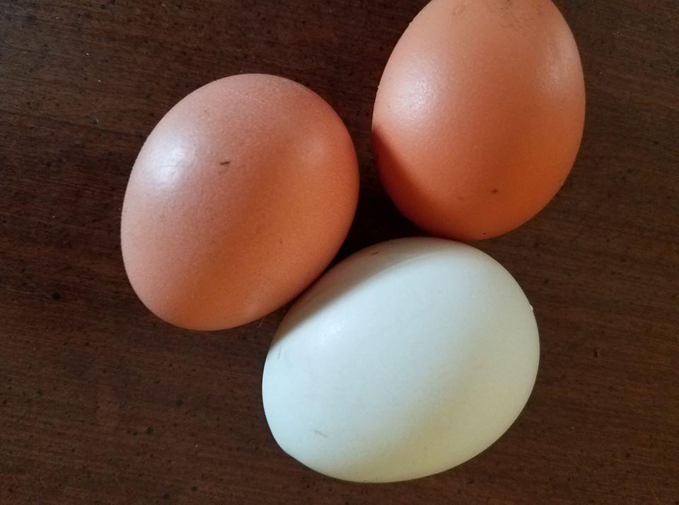 chickenegg.jpg