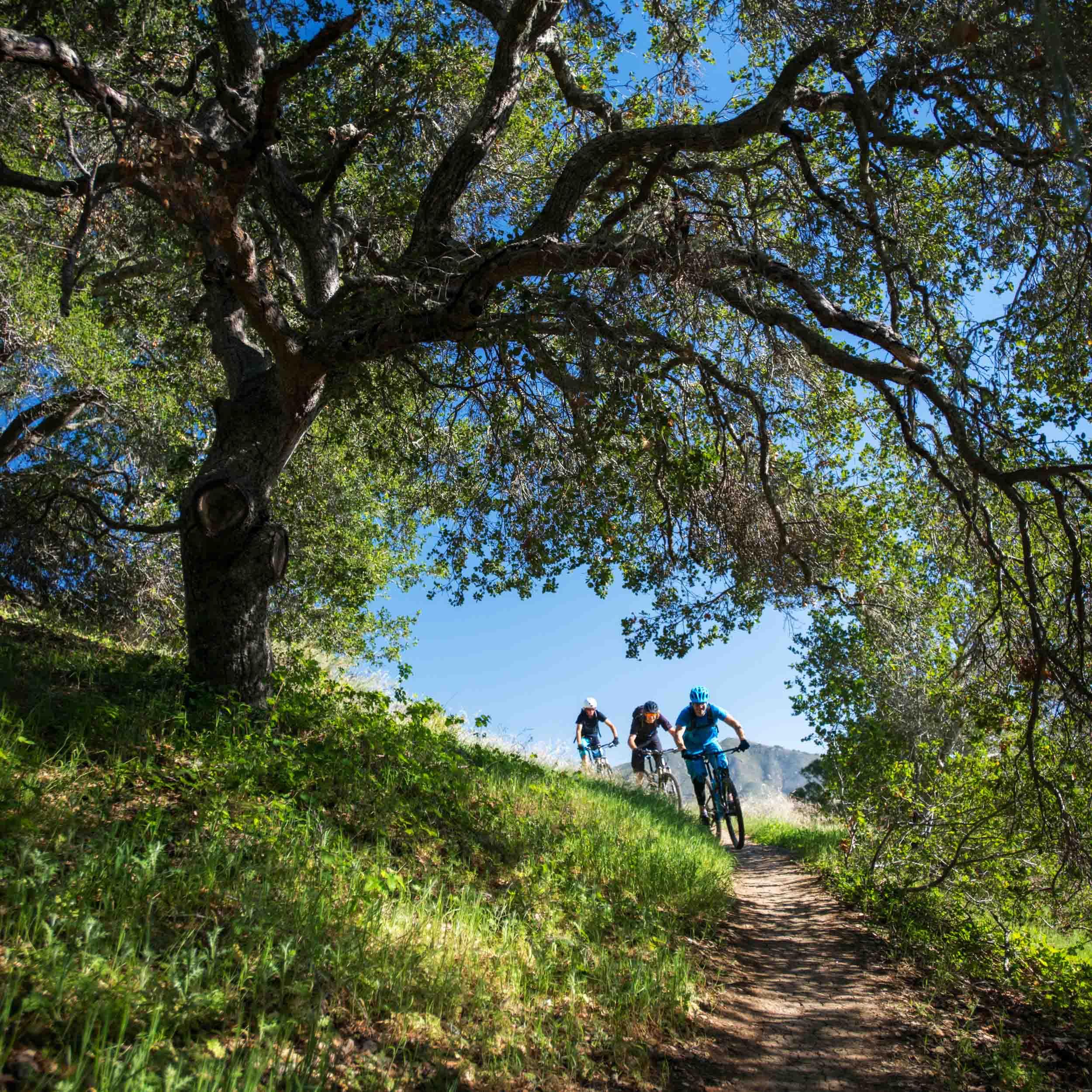 kman_cyclery_tree_trail_mtb_crop_w.jpg