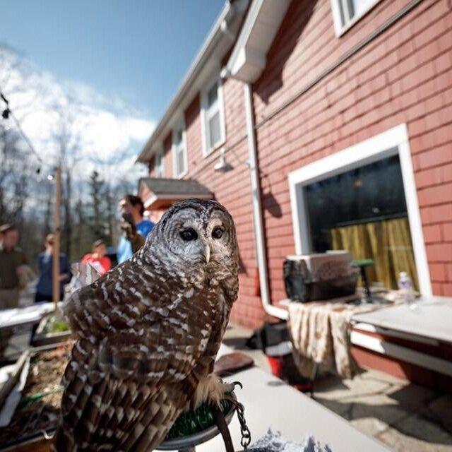 live+owls.jpg