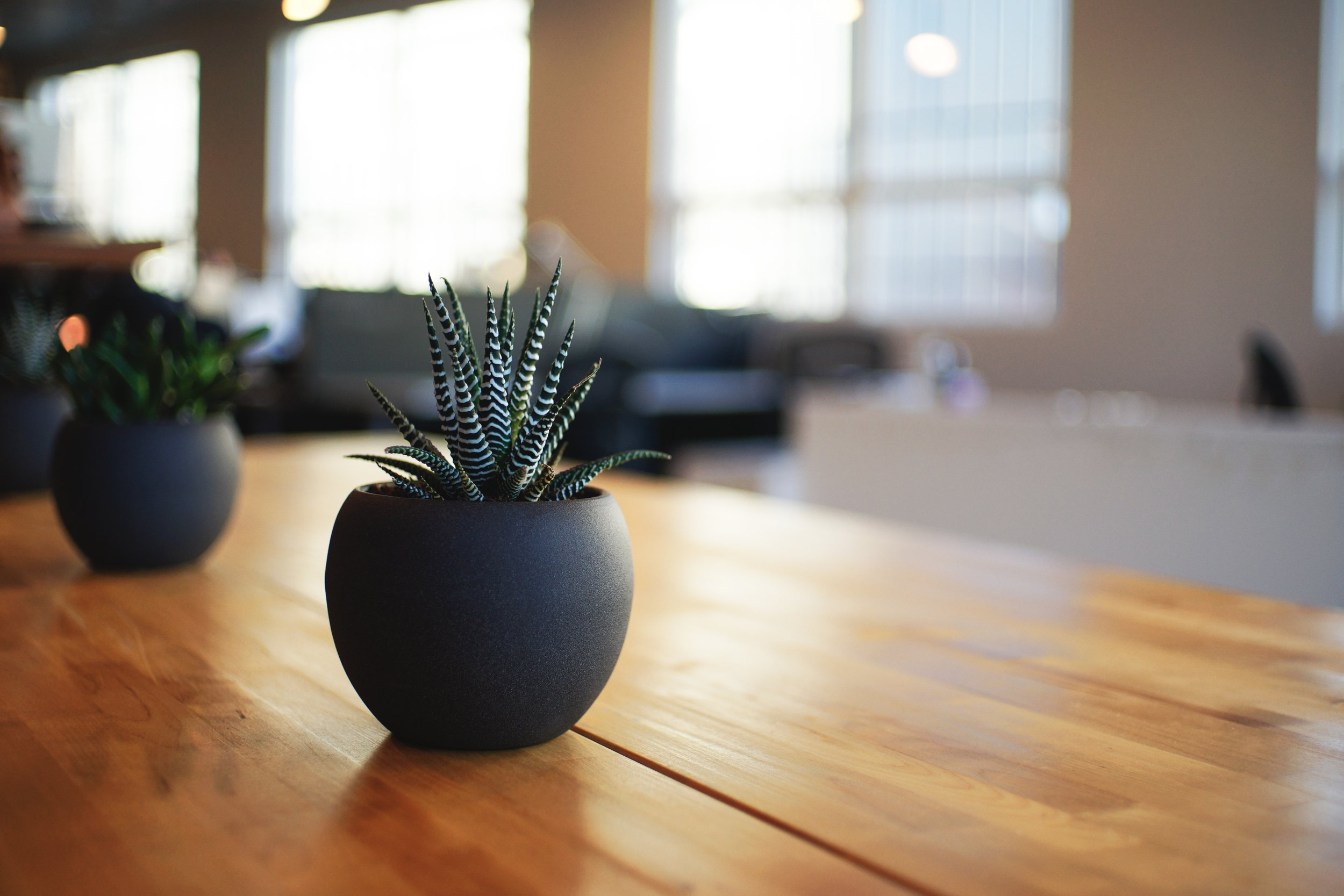 small plants on desk
