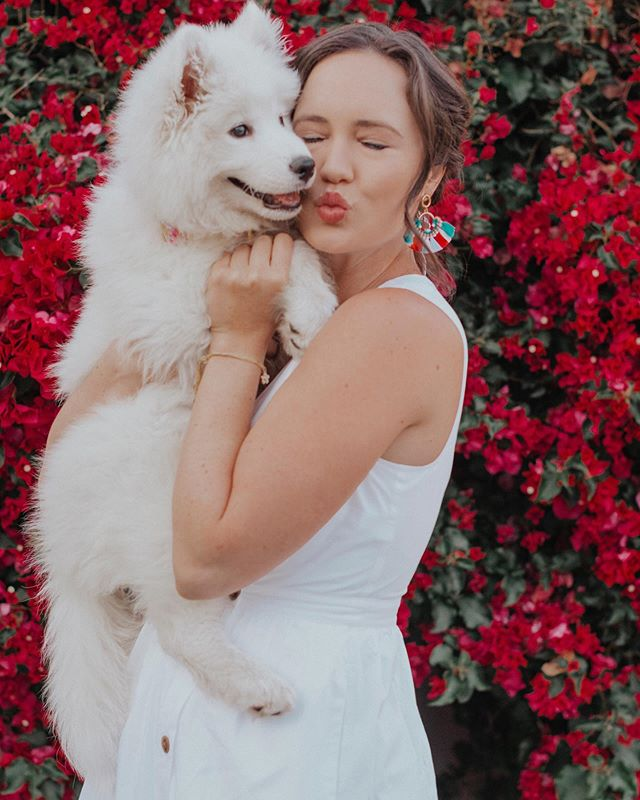 """The STRESS yet the BLESS of traveling with a puppy!"" 🐶 Pup/ Dog moms this blog post is for YOU 😅💃🏻 I took Kara to Venice beach and Malibu two weeks ago and it was stressful!!! Omg 😭 But I learned a few things I could have done differently to make traveling with her so much smoother! Have you ever wanted to travel with your pup? Giving so so much learned advice away you might need! (Link in bio to read the post!) ⁣ ⁣ Sharing Kara's collar in the next slide!!! We love this colorful dog collar from @pawsitivelygolden.boutique 🙌🏻 Brittany is the sweetest owner and she sells these gold buckle and trendy patterned dog collars that I absolutely love!!! Kara can grow into them too! Give check her stuff out 🥰🙏🏻 #dogaccessories #dogcollars #trendydogs #puppymoments #pupmom #samoyedpuppy #samoyedpuppyofinstagram #samoyed #whitehuskypuppy #jcrewstyle #jcrewalways #jcrew #samoyedpage #samoyedfeed #samoyedtimes"