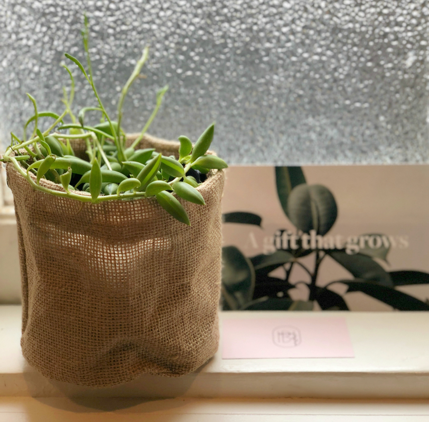 Plant gifts Melbourne online same day delivery