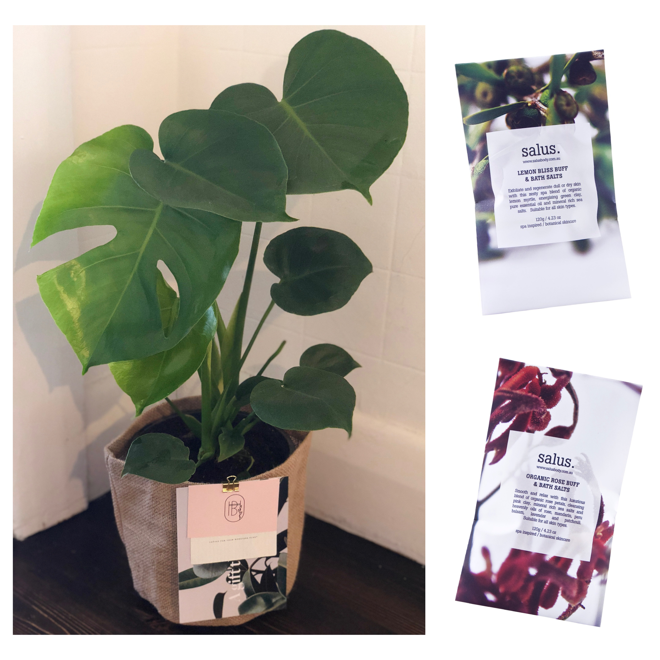 Unique Mother's Day Gift Ideas Melbourne 2018 - send plants not flowers delivered on Mother's Day in Melbourne