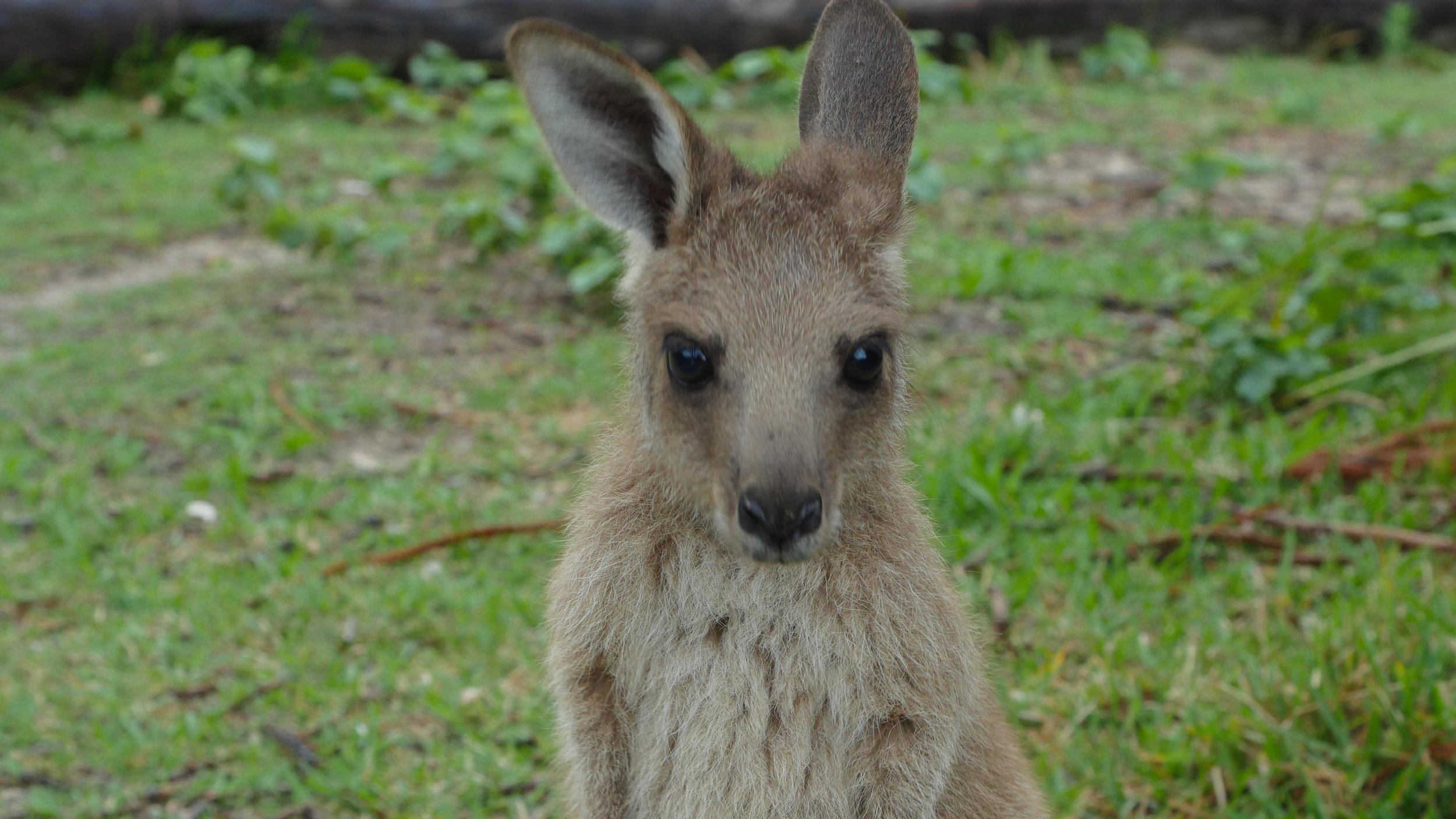 Northern NSW Road Trip Australia Van Life (4 of 15).jpg