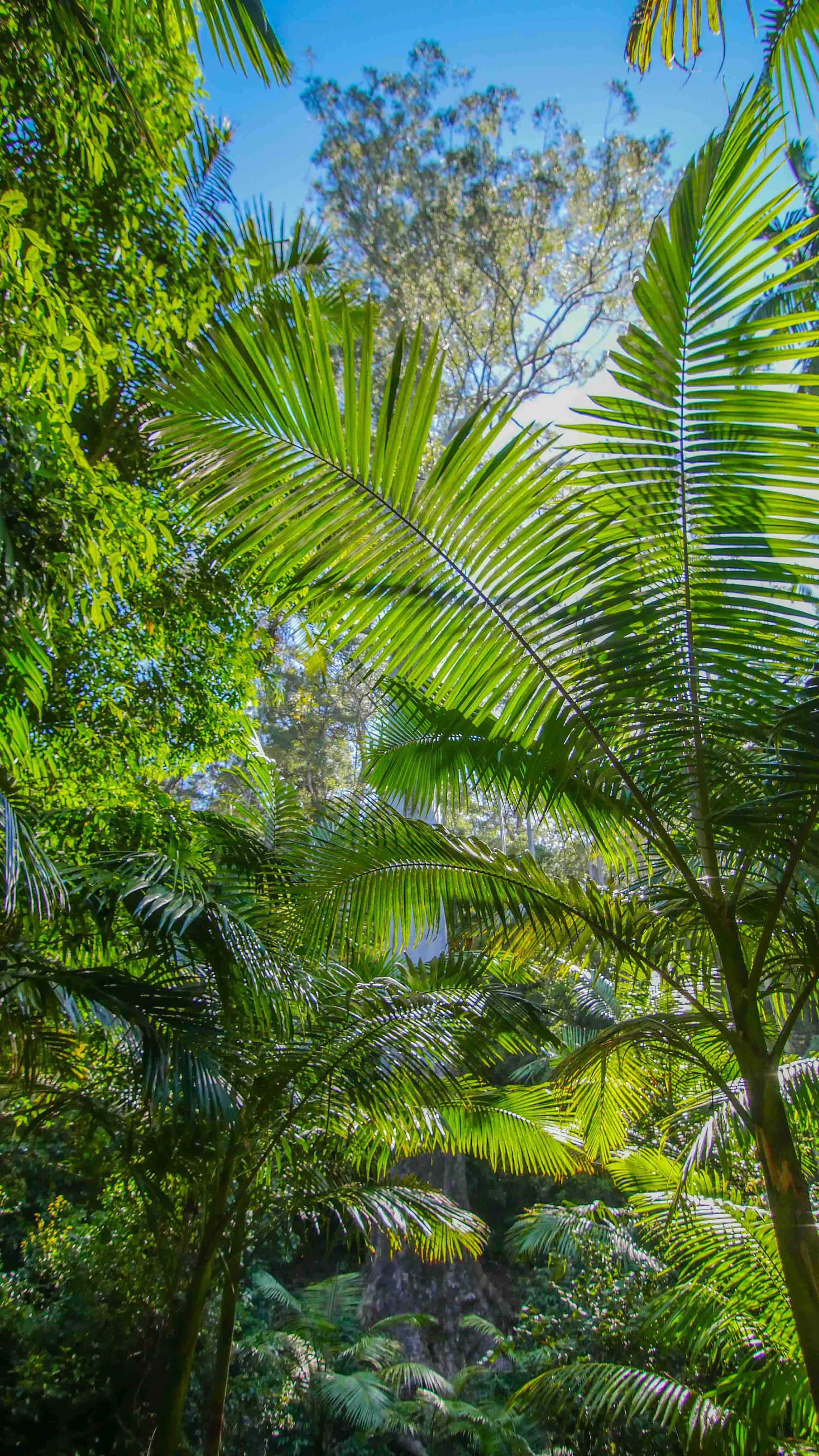 Northern NSW Road Trip Australia Van Life (11 of 15).jpg