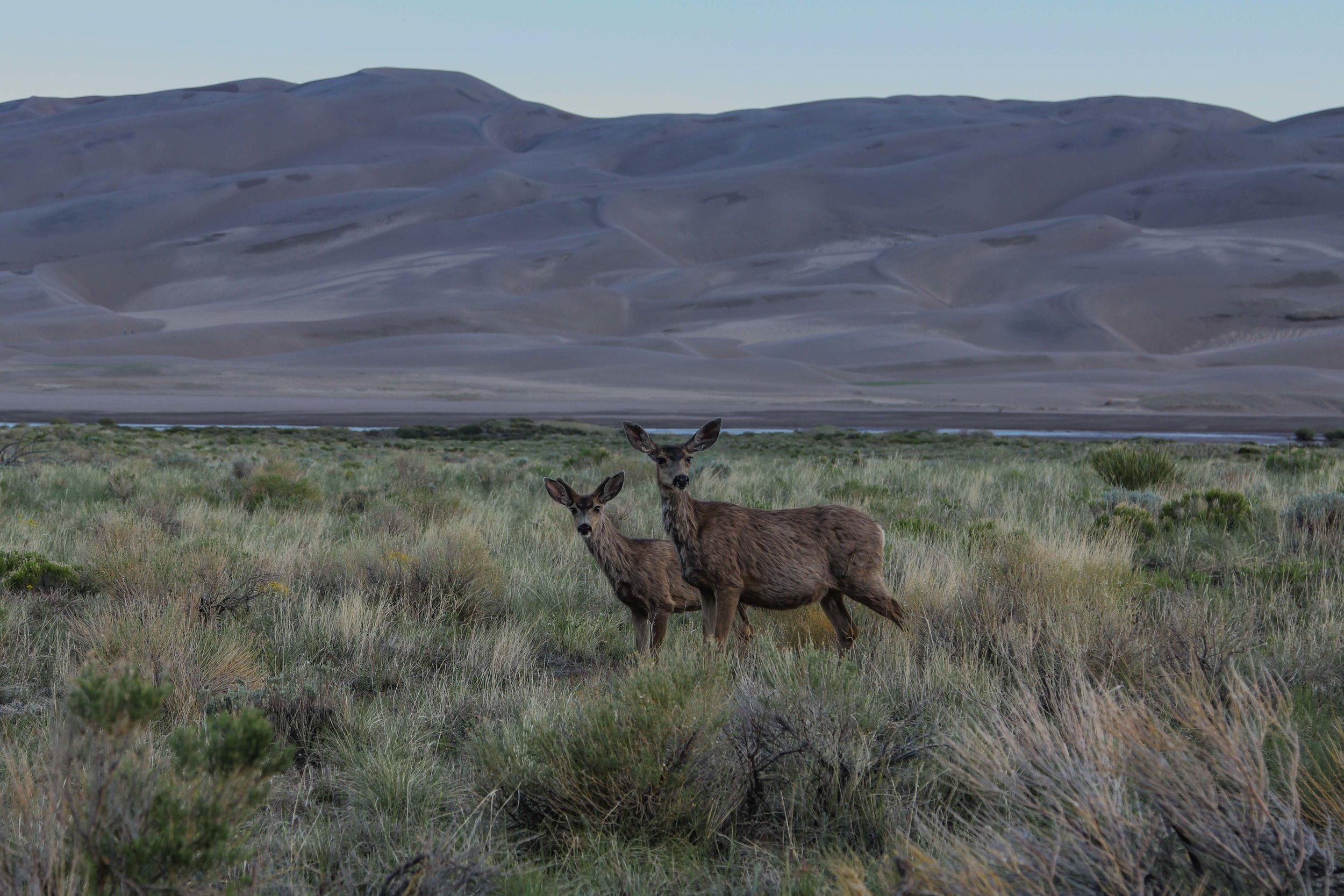 Great Sand Dunes National Park Colorado USA (10 of 11).jpg
