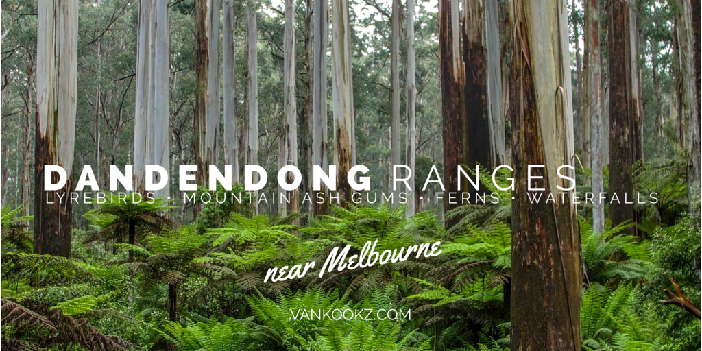 Dandendong Ranges - Amazing National Park right outside of Melbourne. We kind of overlooked this place based on the proximity to the city, but then we heard about Lyrebirds. We had actually detoured to the Dandenong Ranges with the slight hope that we might see the elusive Lyrebird.