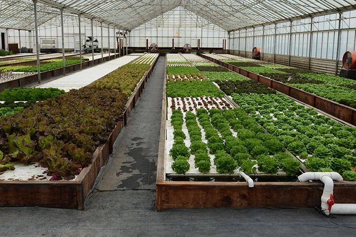 farming-6.jpg