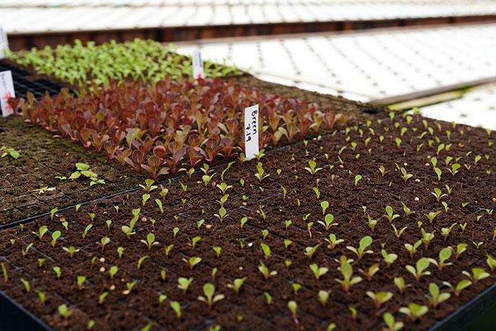 farming-9.jpg