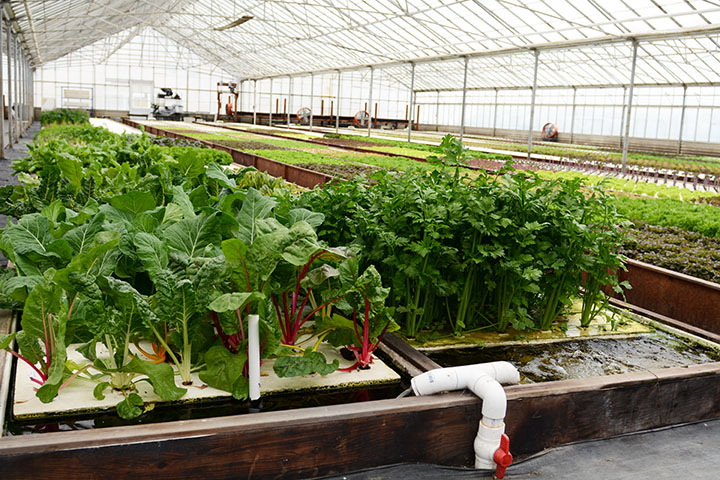 farming-20.jpg