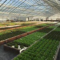 Aquaponic Farming Experience