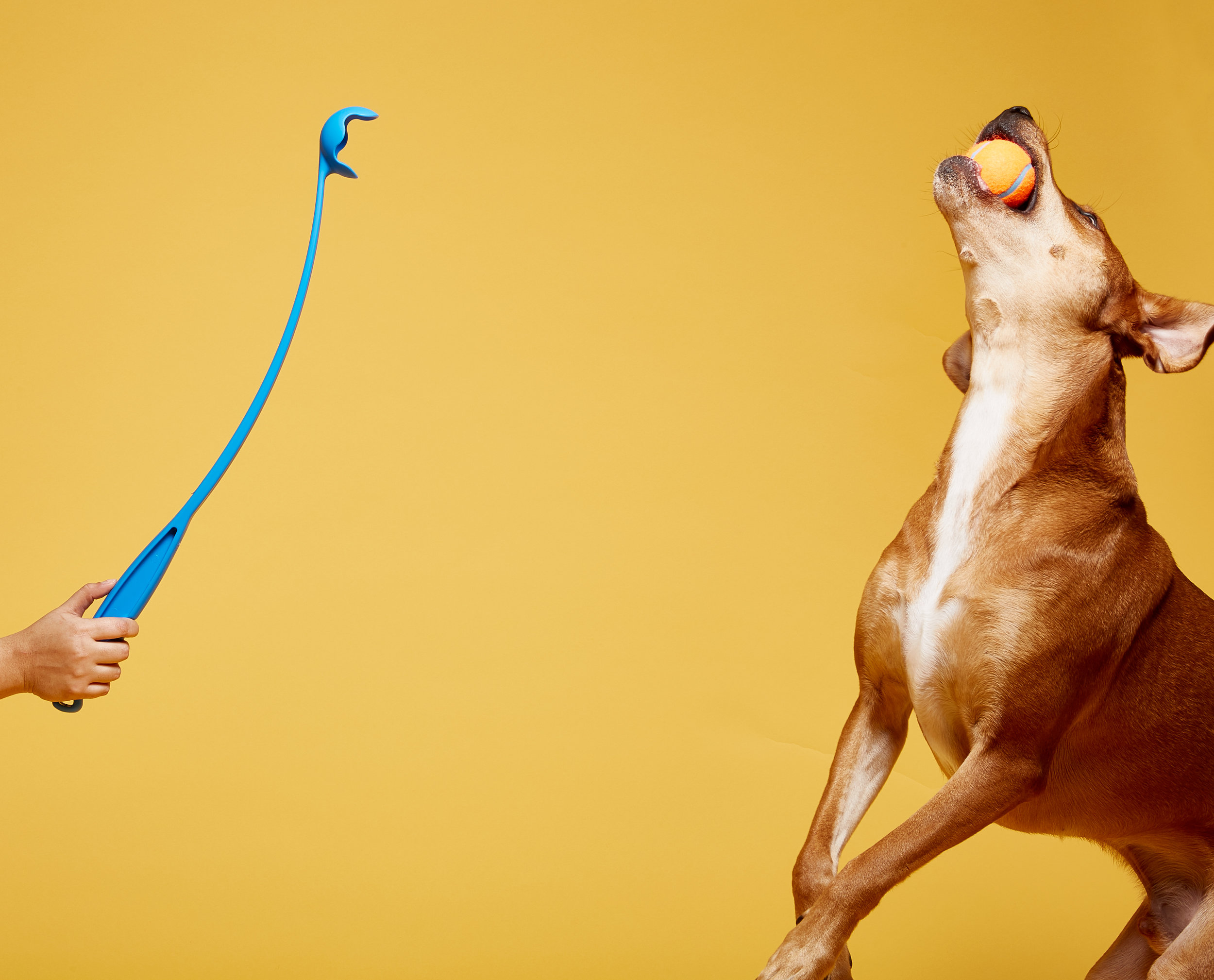 A commercial, lifestyle, advertising image of a dog toy and a brown dog - taken by Javier Edwards, in Miami, Florida.