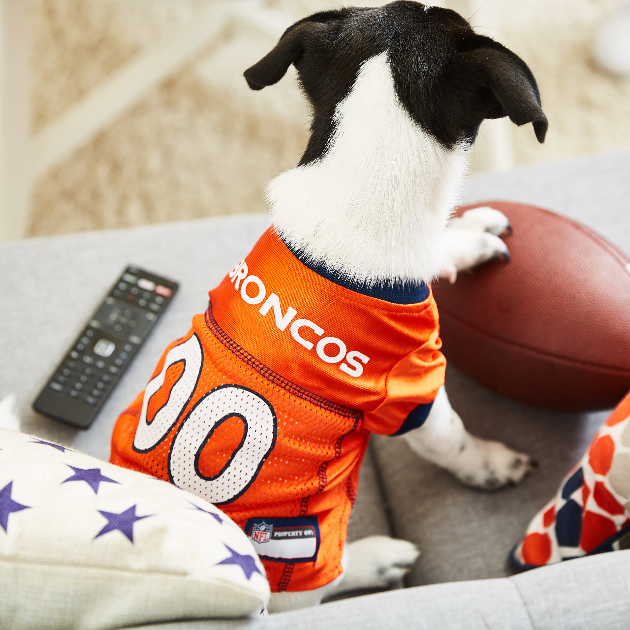 Commercial, advertising, tabletop food product photography taken for Chewy.com of a dog in a football jersey - by Javier Edwards of El Roi Photo, based in Miami, Fl.