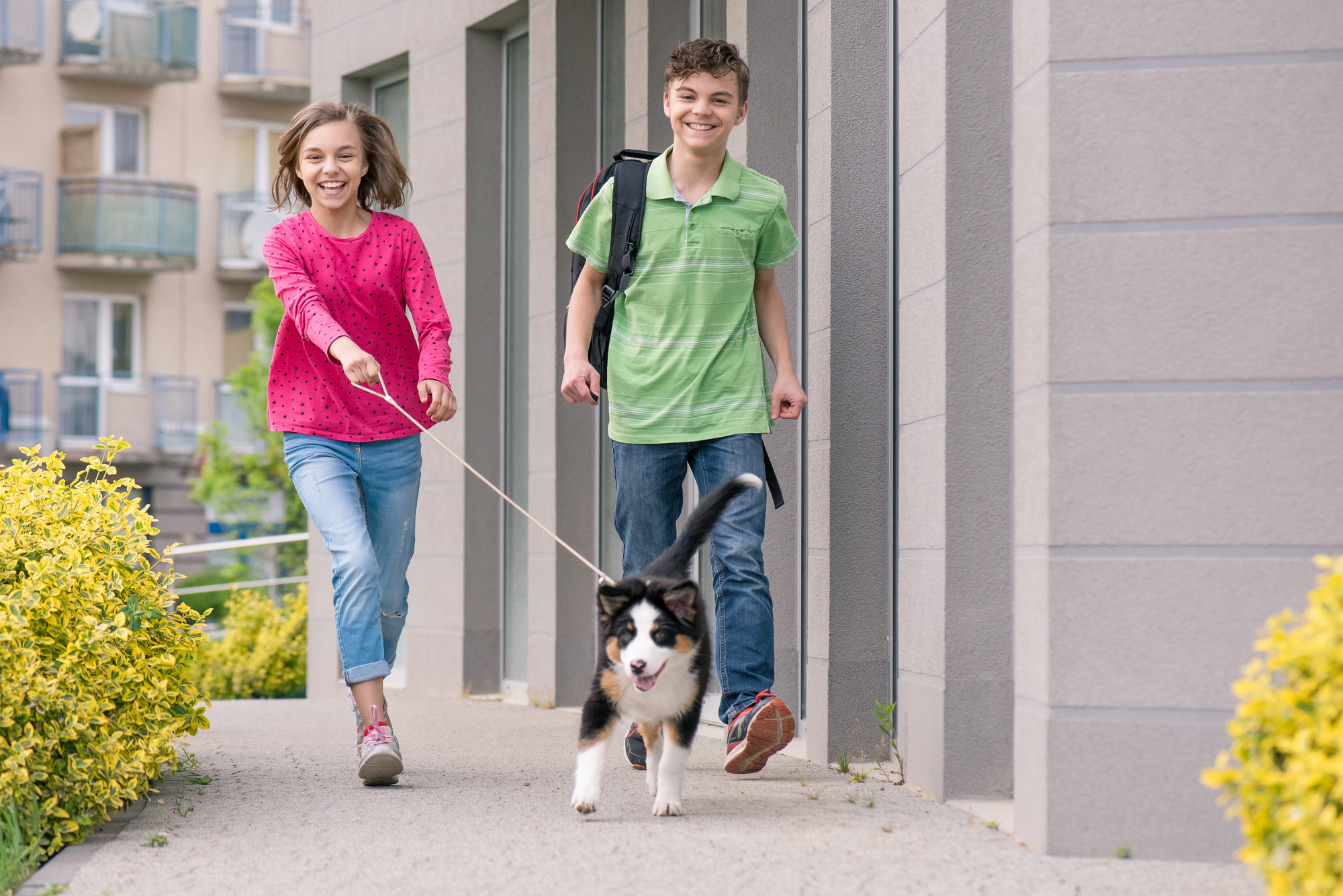 10 Best Summer Jobs for Teens-Dog Walker