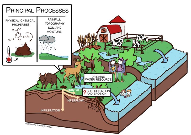 Feaces soil processes