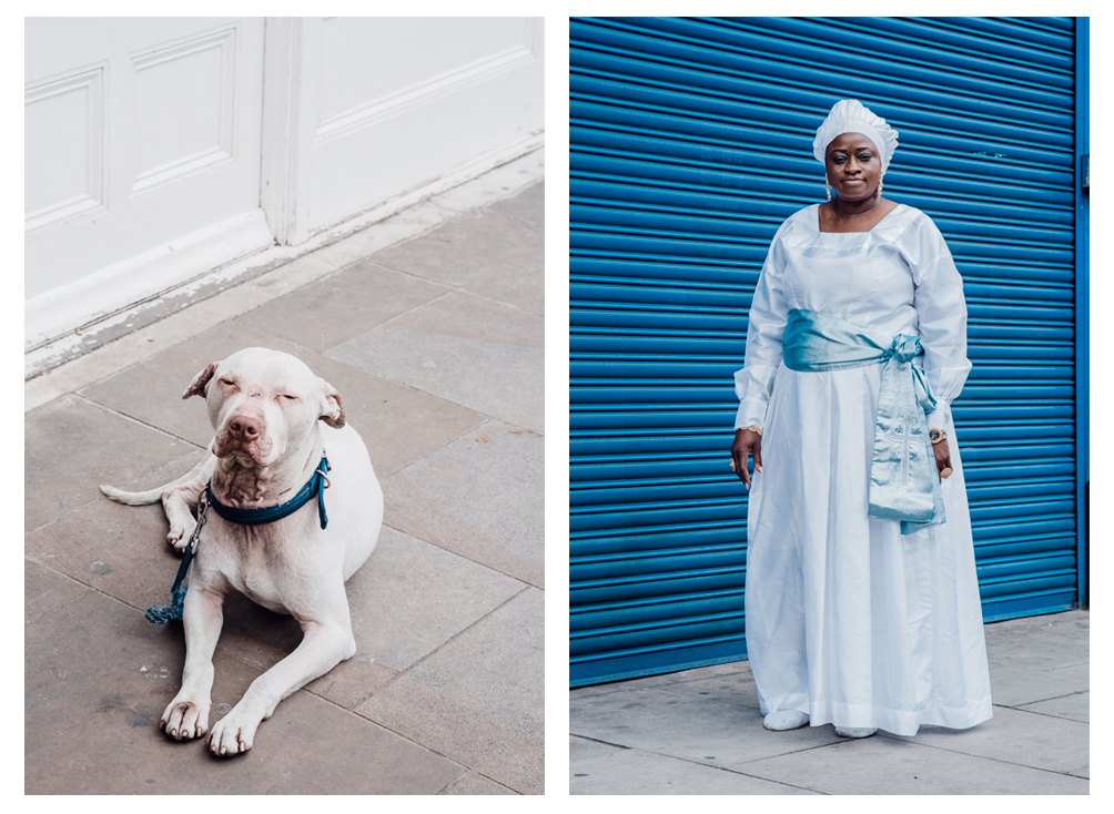 White Dog with Blue Collar / Olu