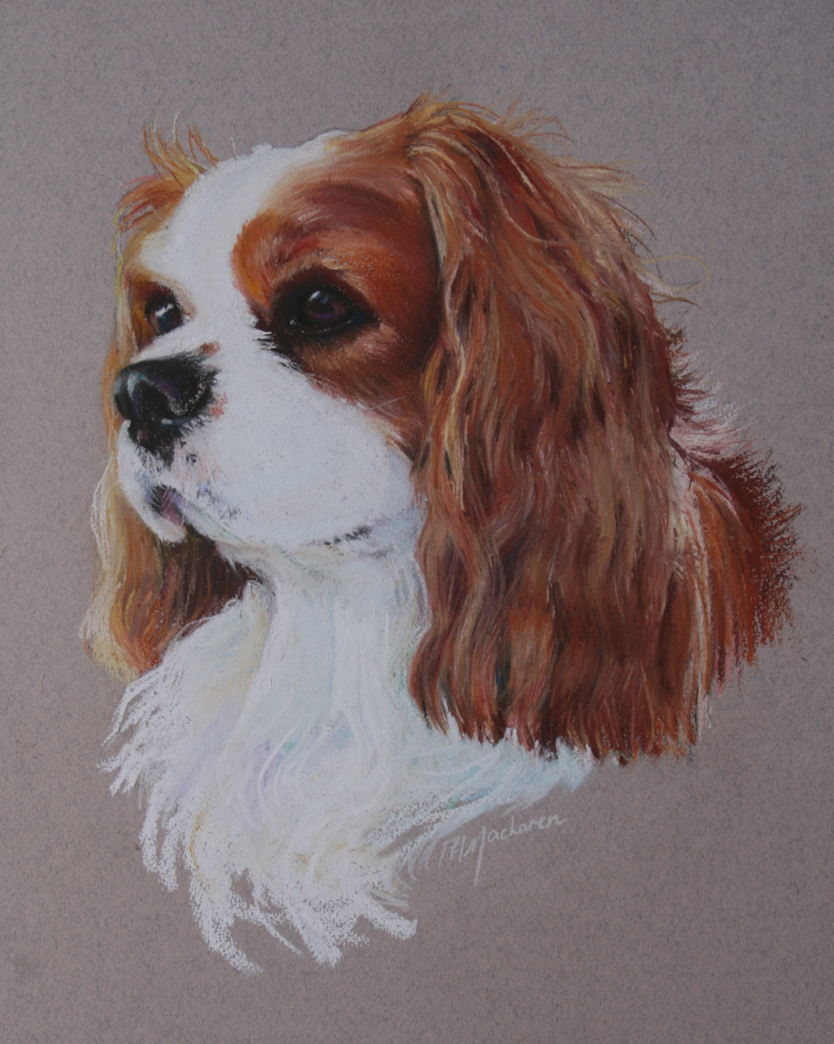 Commission:  Cavalier King Charles Spaniel. Pastel. 42 x 32cm.