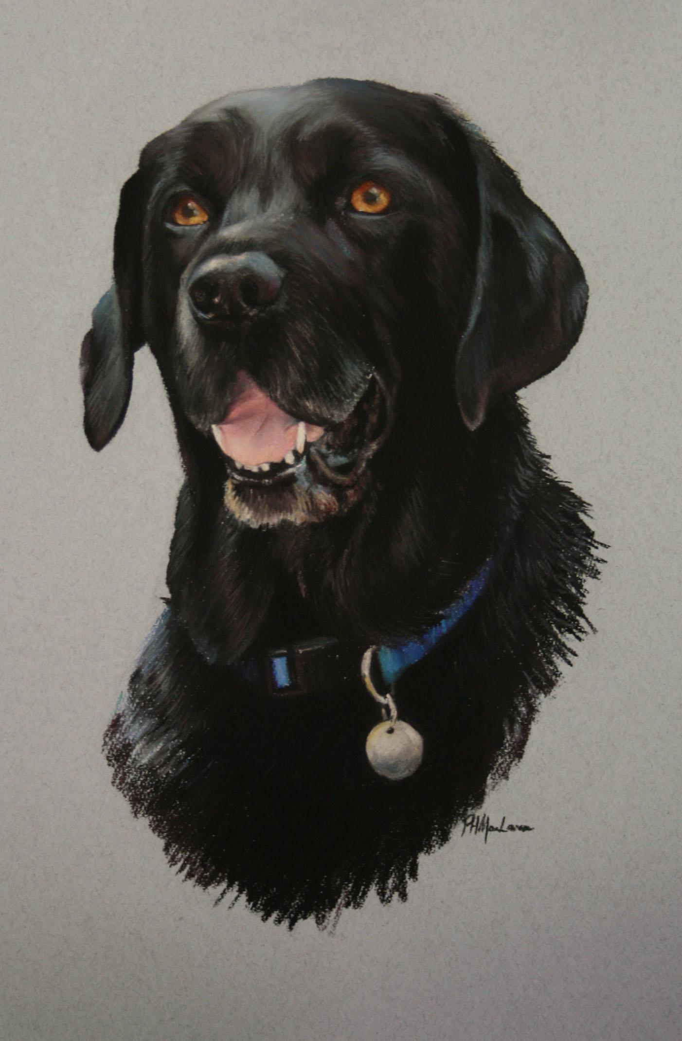 Commission:  Black Labrador.Pastel. 42 x 32cm.