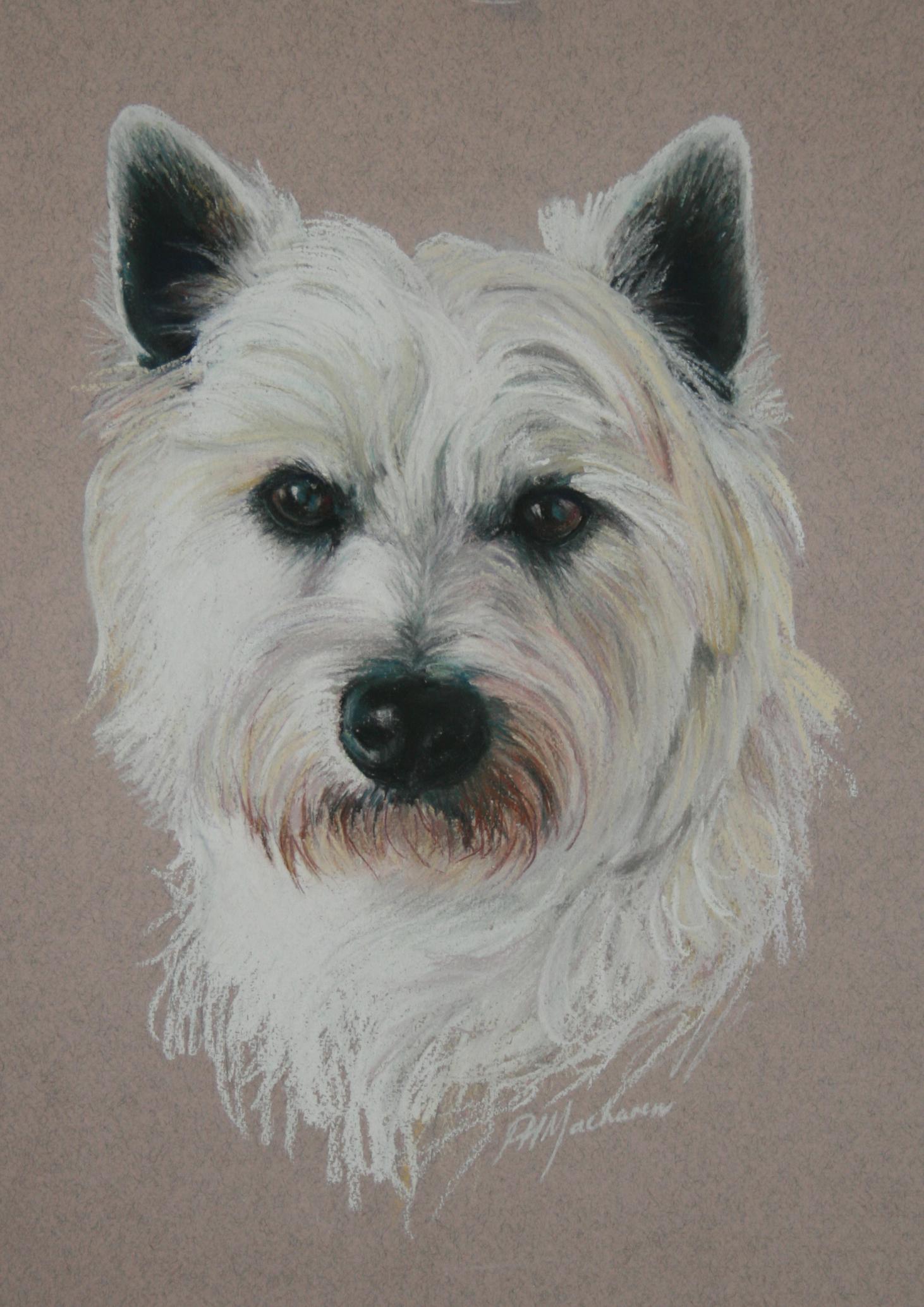 Commission:  'Jock' West Highland White. Pastel. 42 x 32cm.