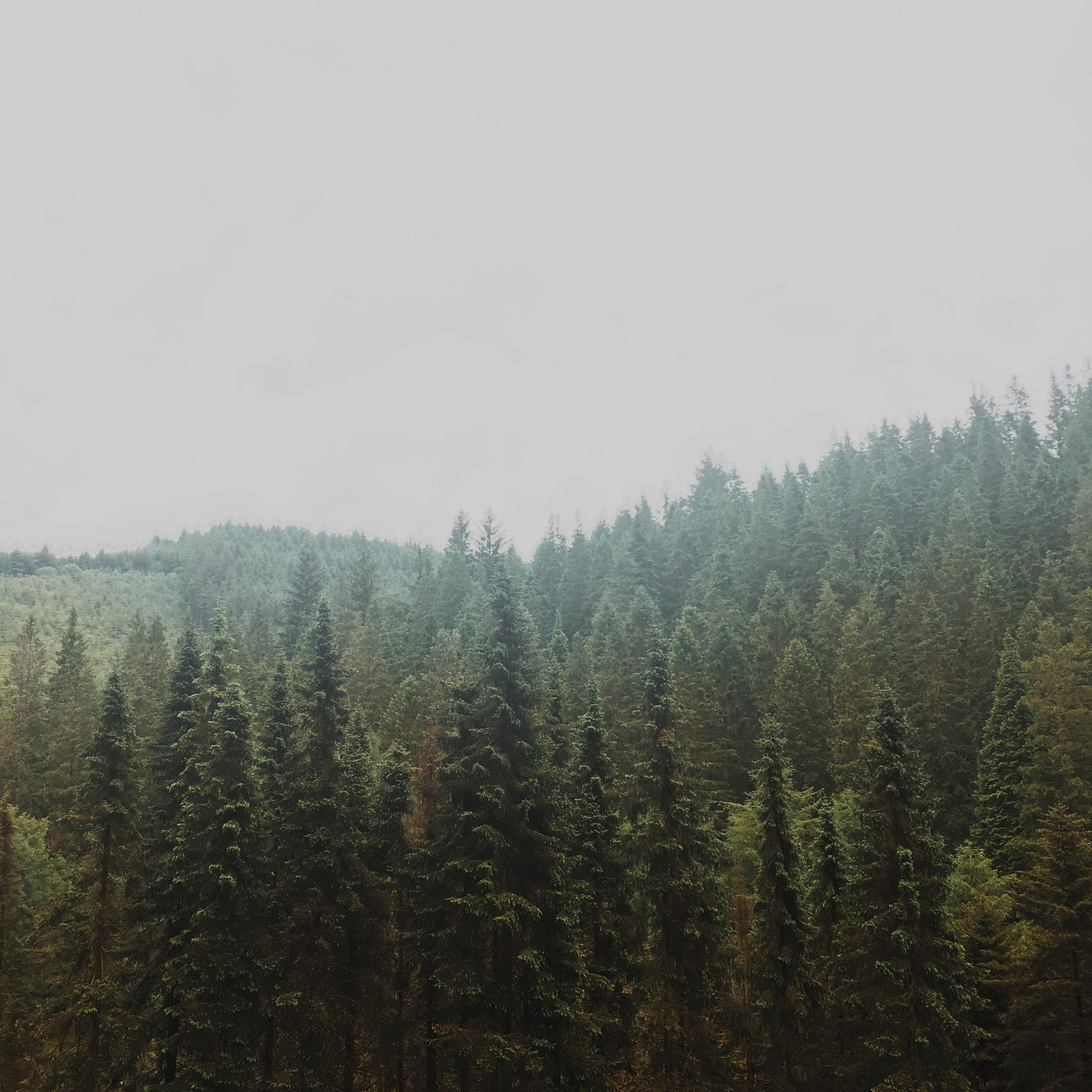 Deep filled pine forests. You could almost be in America's North West.