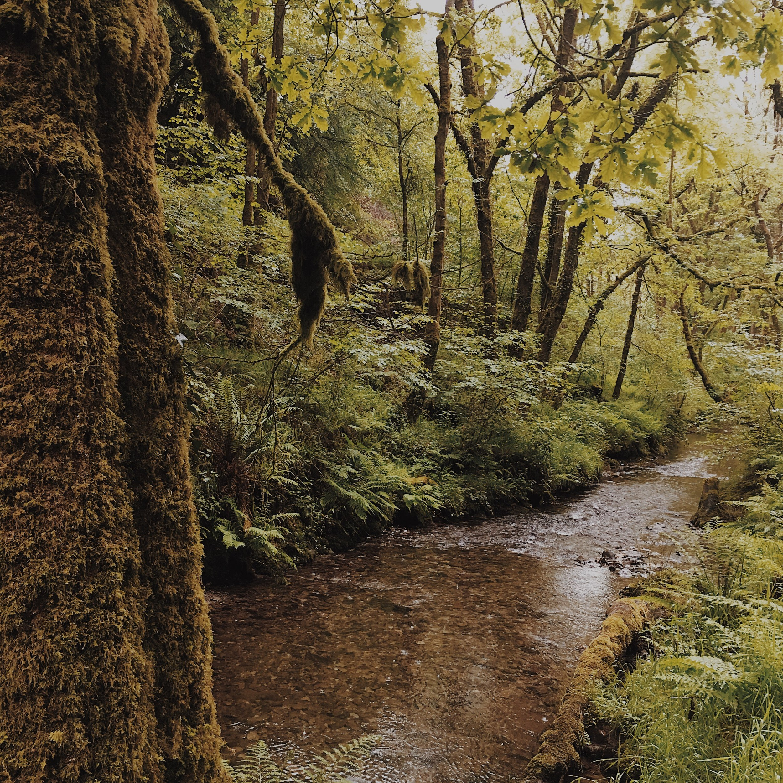 The Afon Gorlech switches back through the forest and you follow it along as you walk through the trees.