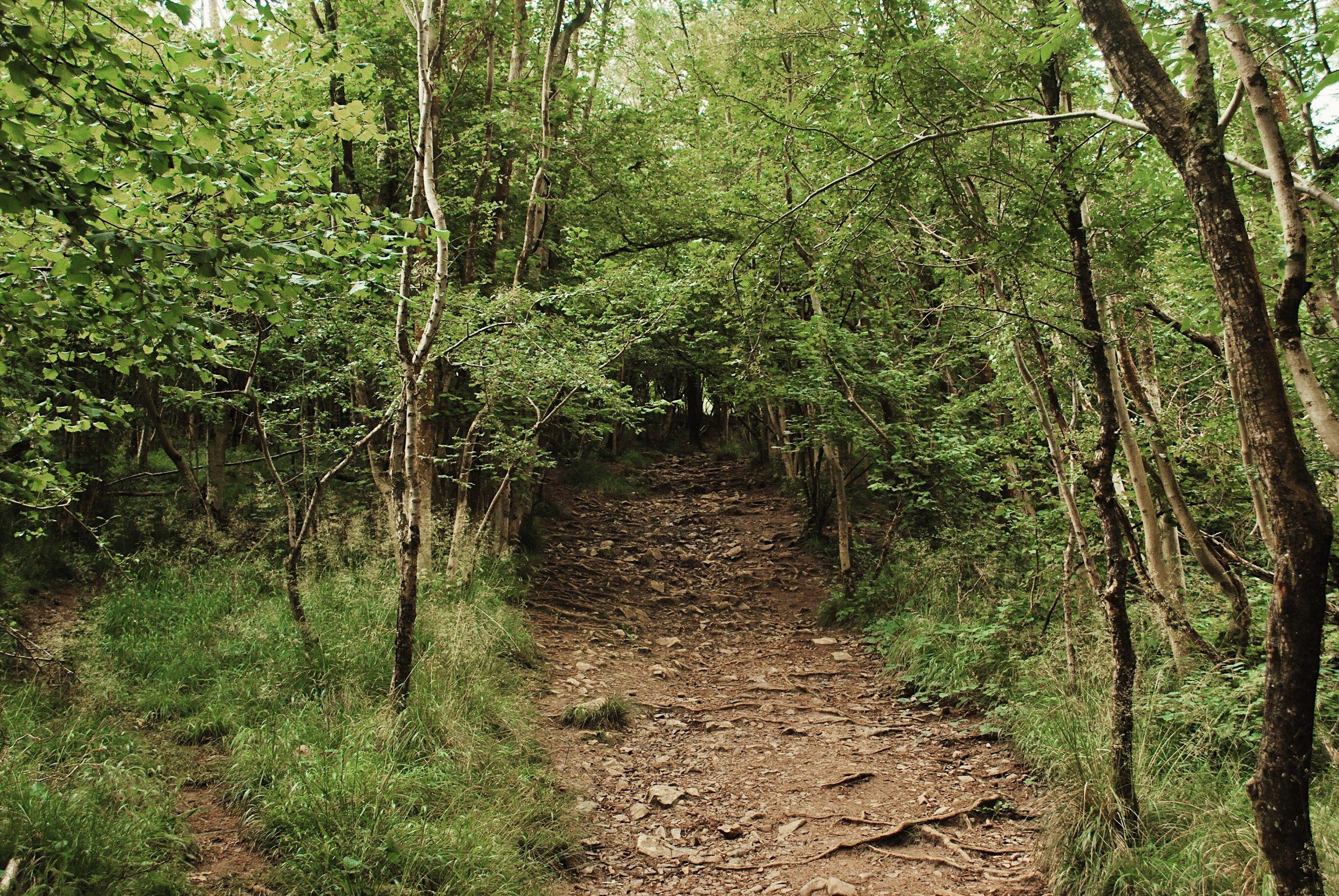 The steep climb through the woods