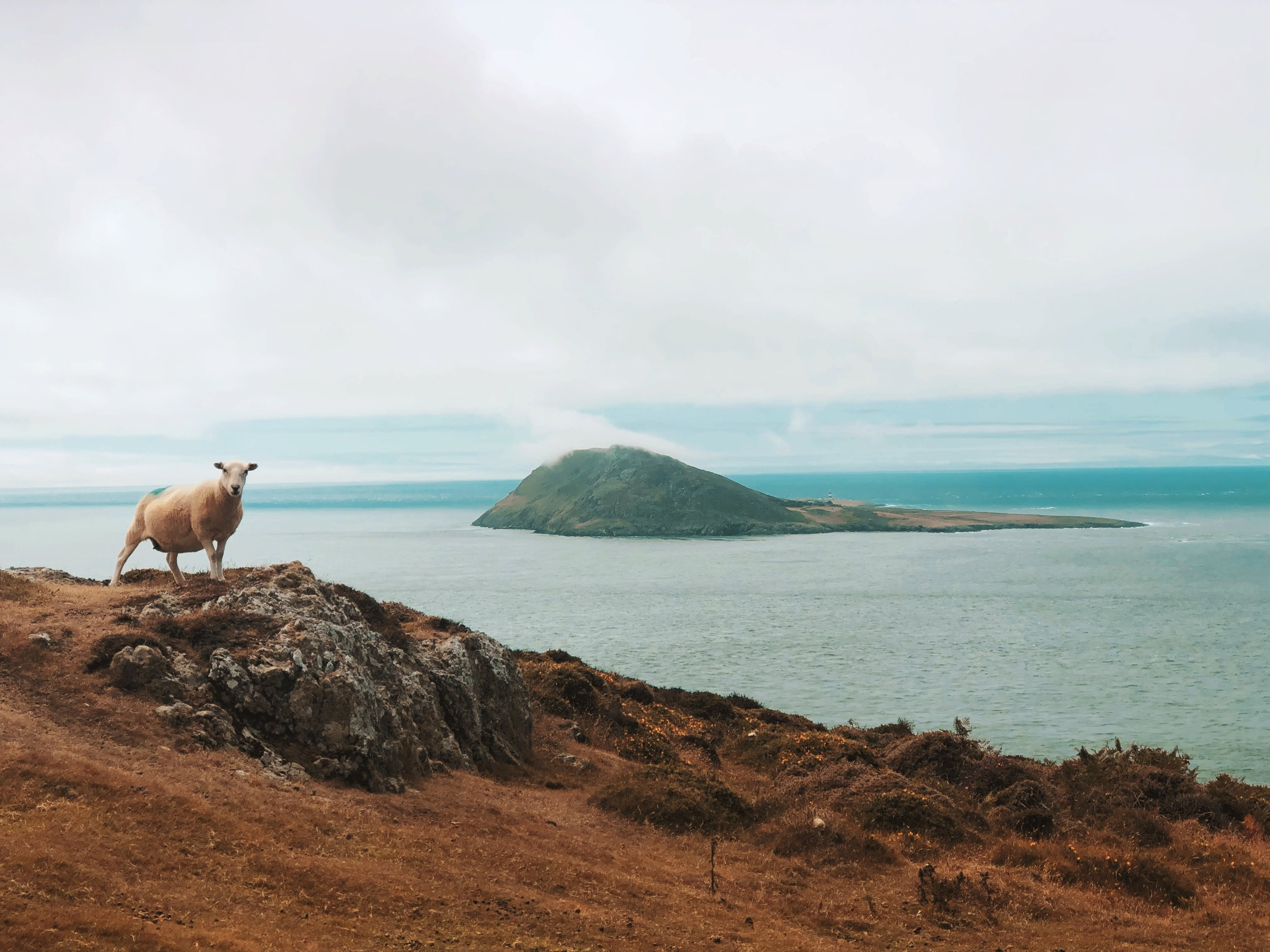 Bardsey Island and a local.
