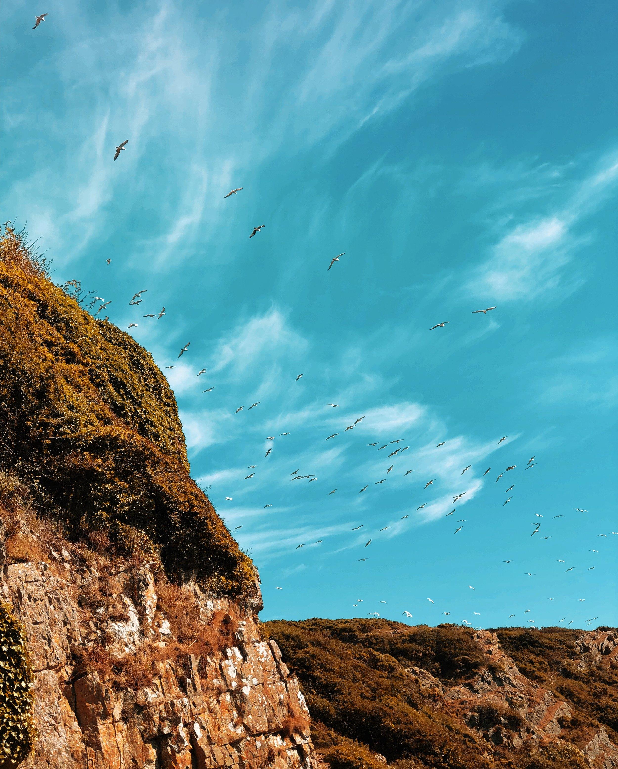 The gulls flocked around Ramsgrove Cove.