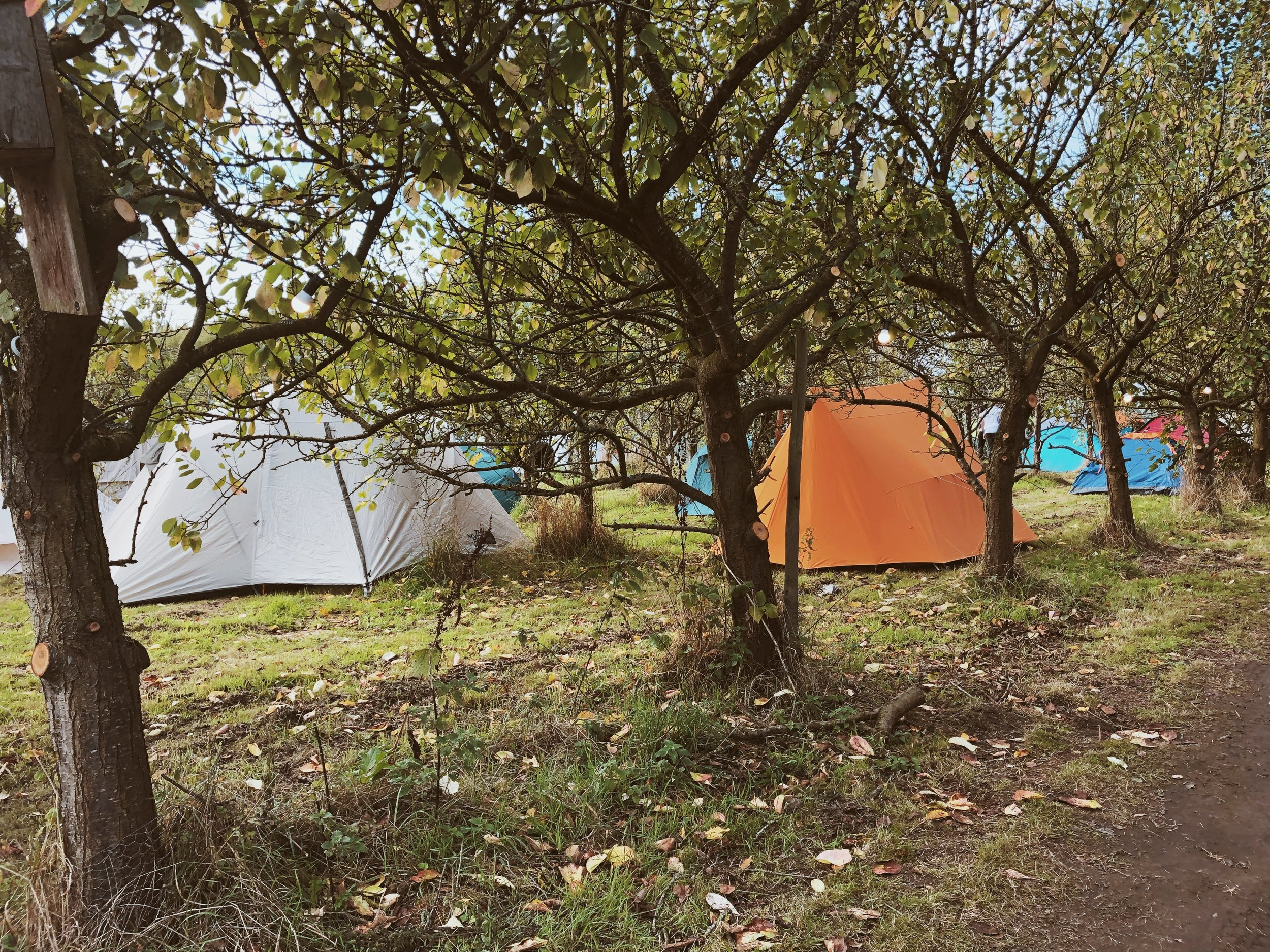 Camping in the orchards