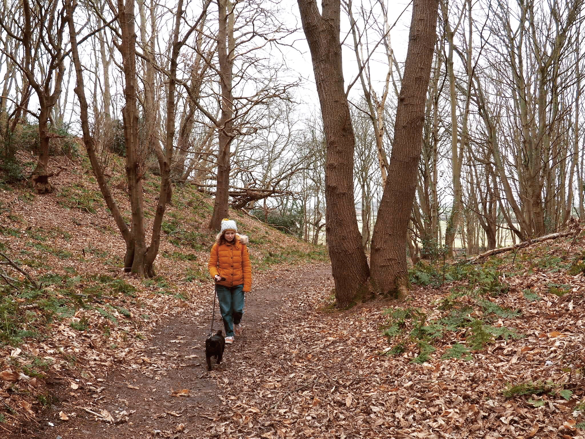 Walking up through the Hundred Acre Wood