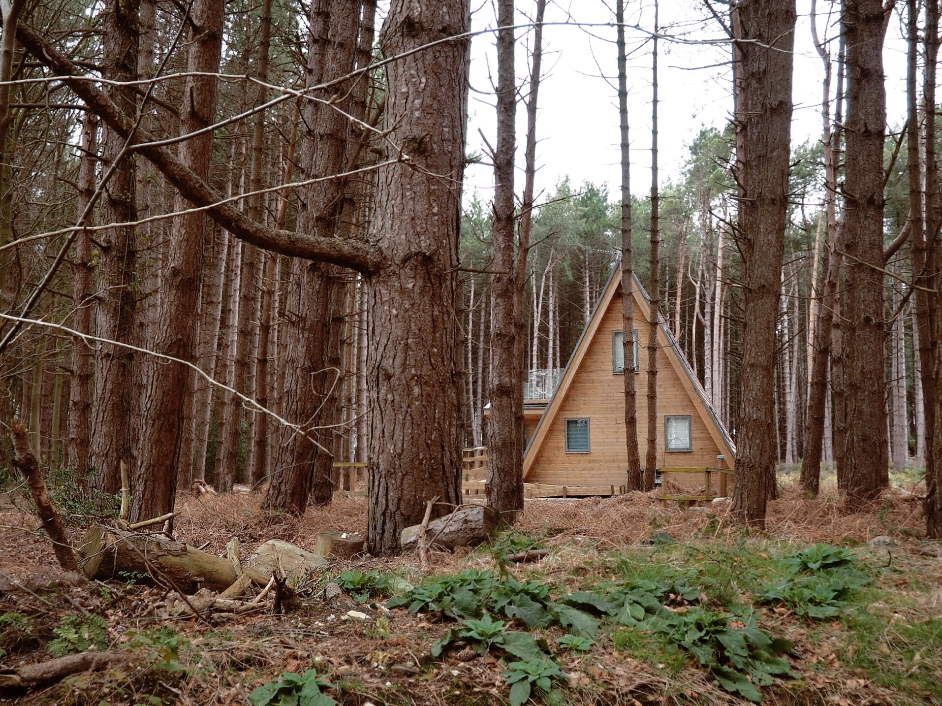 Cabin Goals