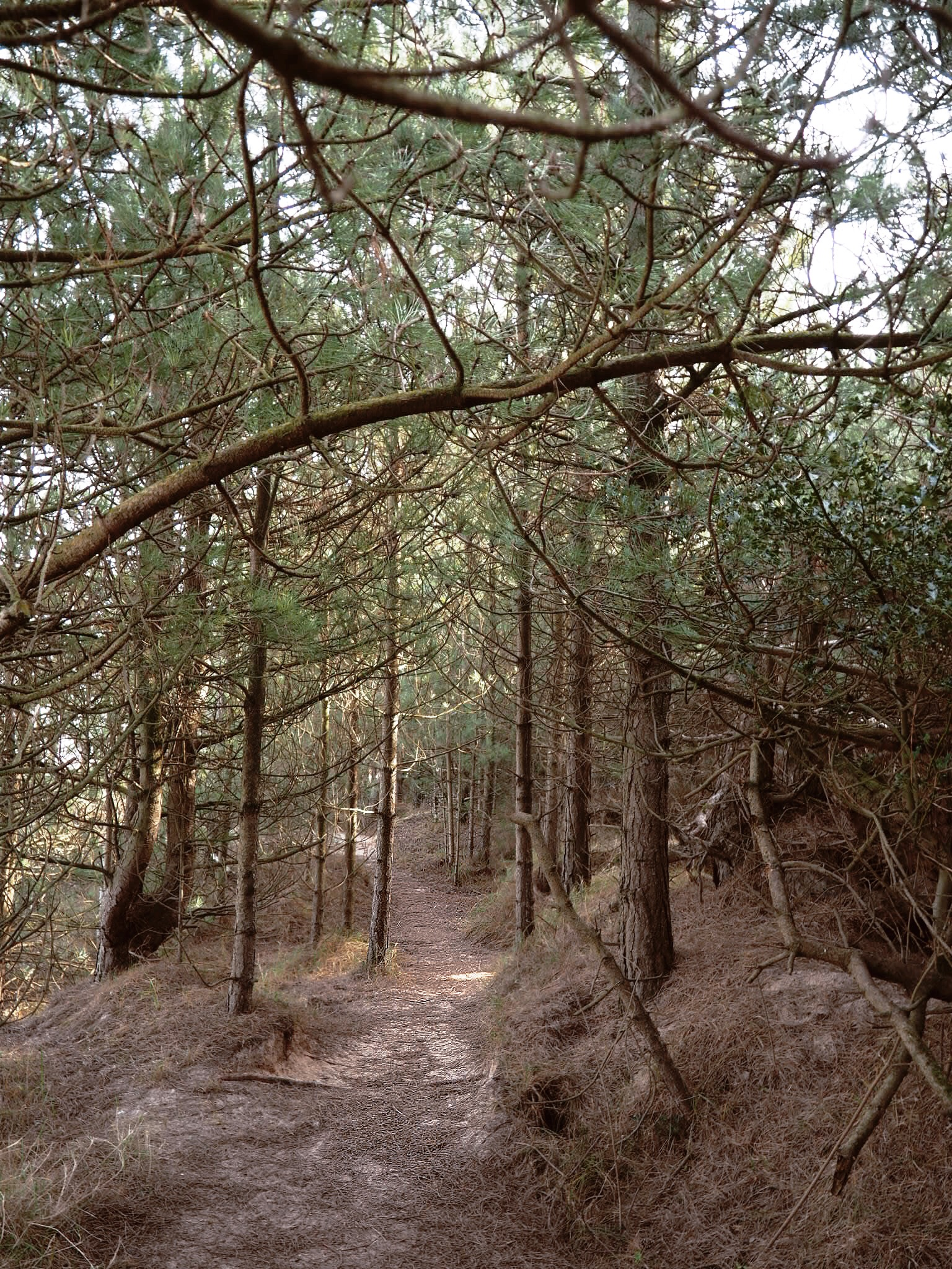 Woodland trails in Wells.