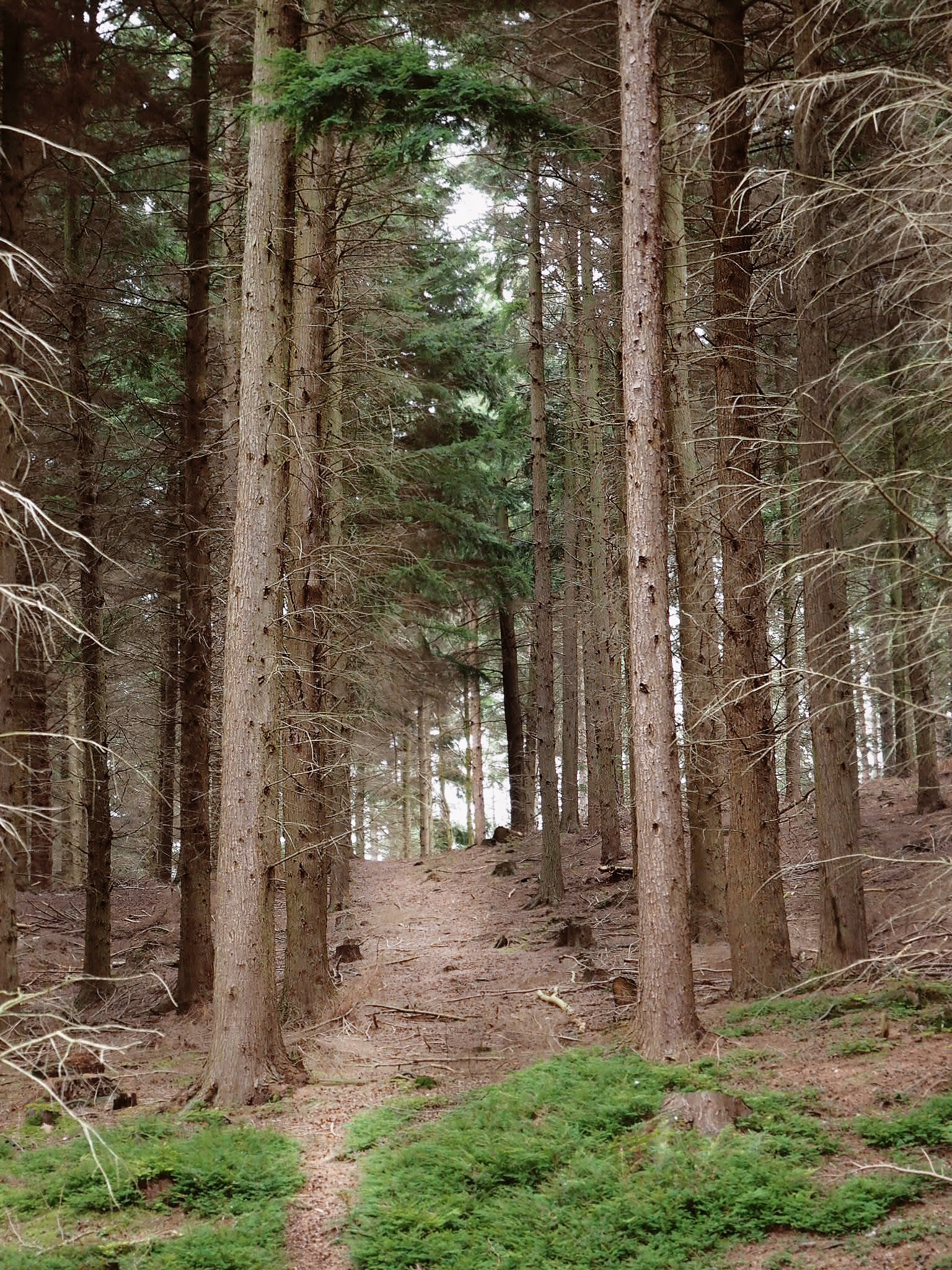 The dry forest floor