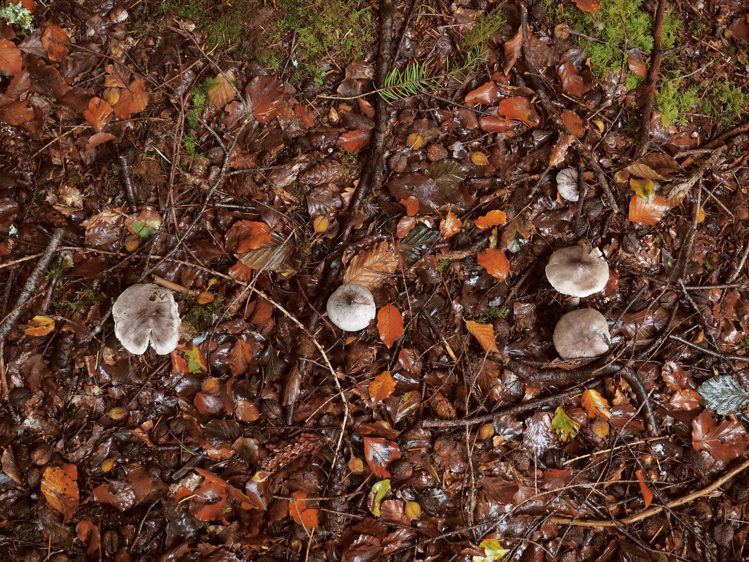 - There are many set walks to explore or you can test your orienteering skills and find your own path!On our walk we certainly felt like Autumn had well and truly begun.Mushrooms, berries, nuts and pine cones littered the forest floor with natural confetti.