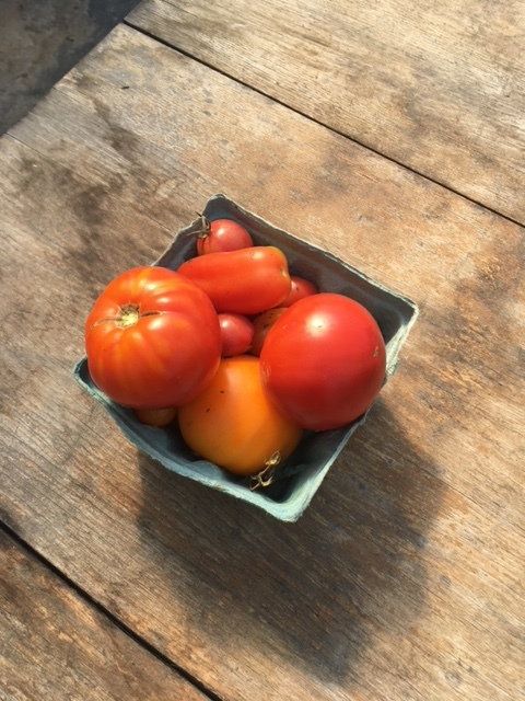 barn tomatoes.JPG