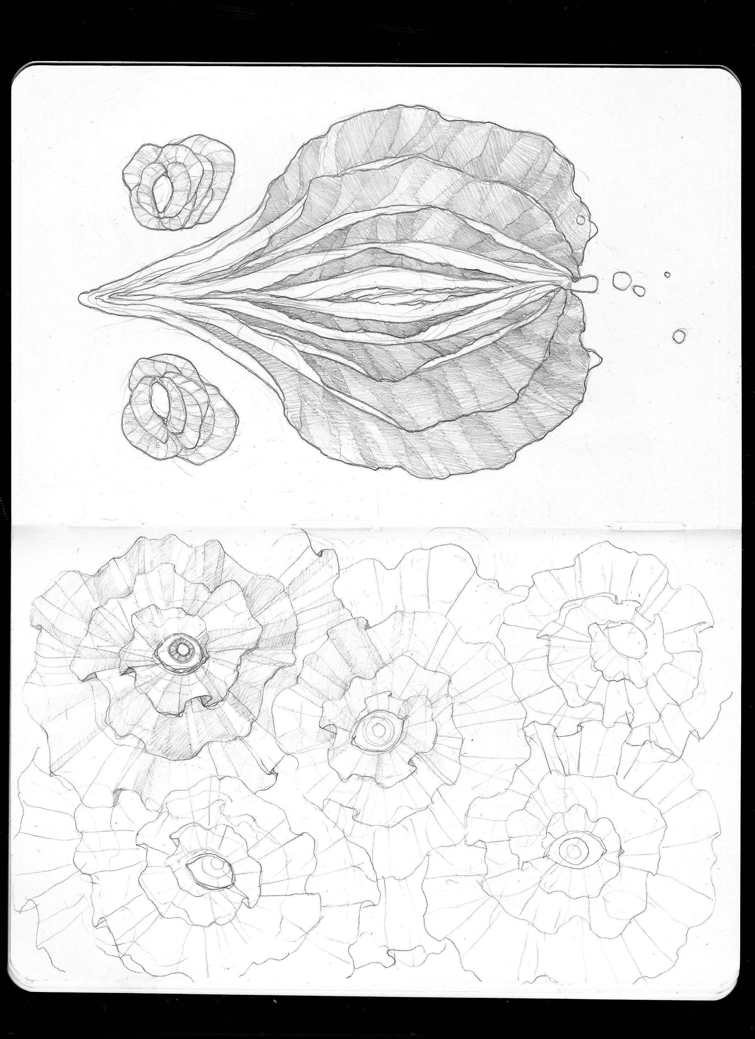 Vagina Flower.jpg