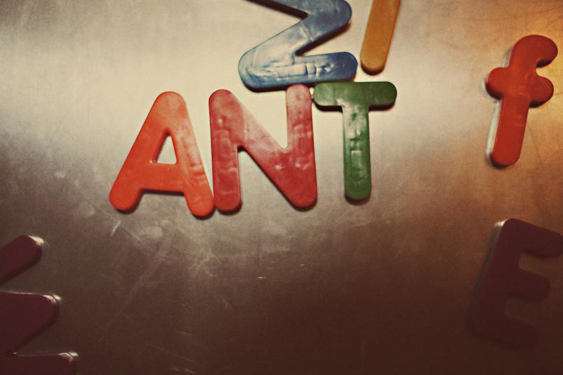 day_ant50.jpg