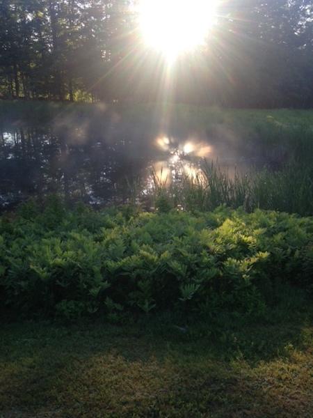 pond dawn.jpg