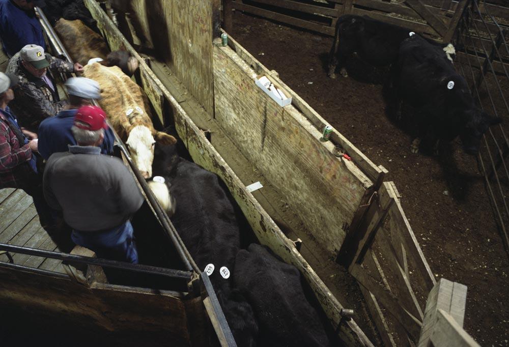 livestock2_2.jpg