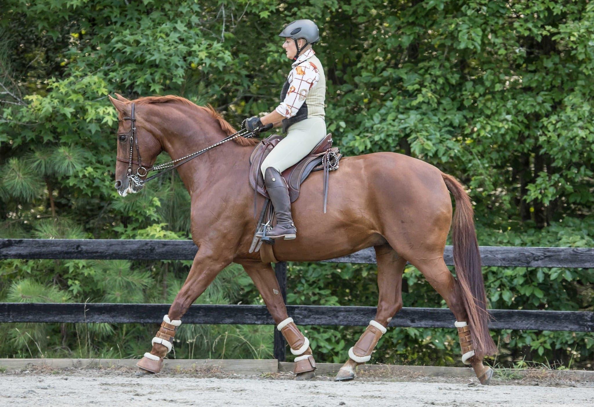 Stone Horse Hill Farm. Sandy Hook, Virginia . Dr. Rebecca Yount (photo credit: Grace Kellogg)