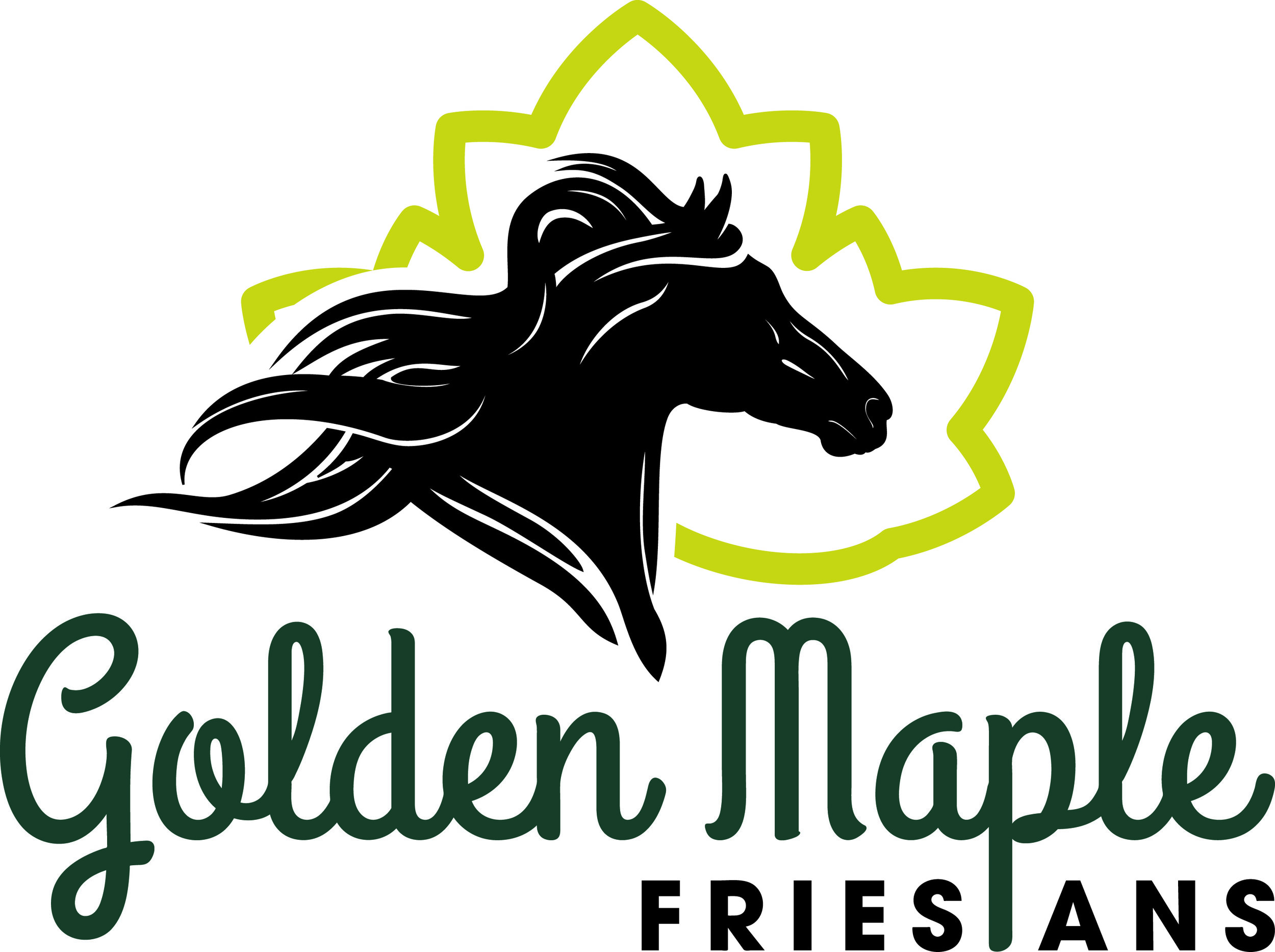 Tamera Mayo - Golden Maple Friesians  - Black horses with hearts of gold.