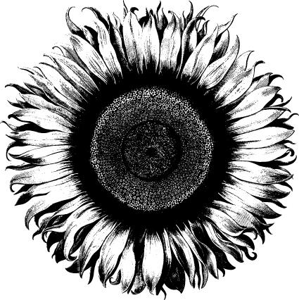 beatin-path-sunflower-1.jpg